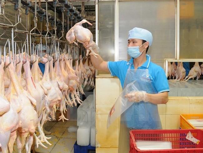 越南向俄羅斯出口雞肉及其製品