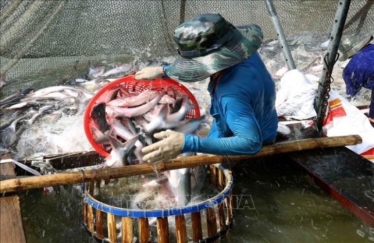 越南水產品出口創匯增長2.2%