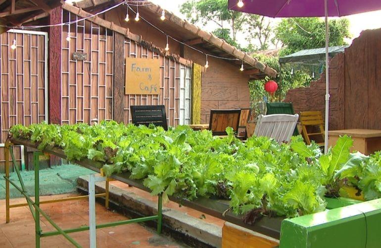 農園民宿旅遊——嘉萊省旅遊發展的新方向